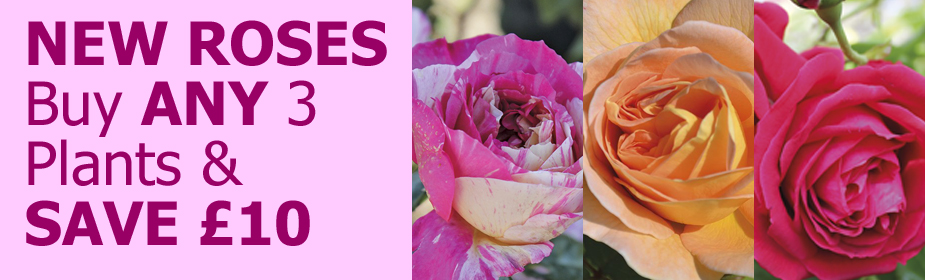 Buy Any 3 Roses And Save £10