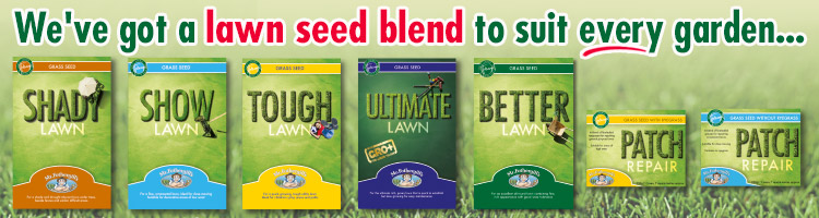 Lawn Grass Seed