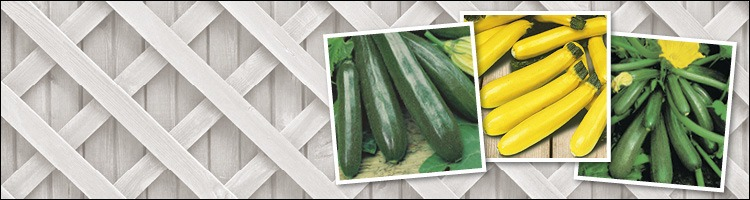 Courgette Seeds