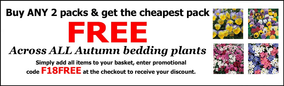 Buy 1 get 1 FREE on Autumn Bedding Plug Plants