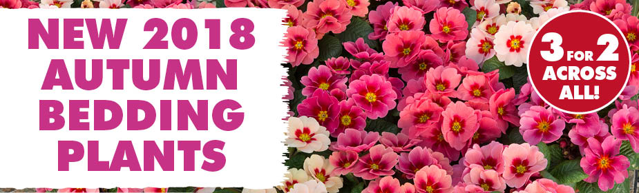 3 for 2 across ALL Autumn Bedding Plants!