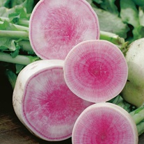 Radish Red Meat Seeds