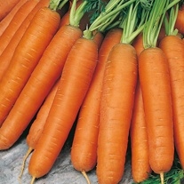 Carrot Early Nantes 5 Bumper Seed Pack