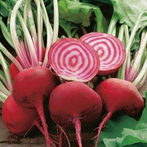 Beetroot Chioggia Seeds