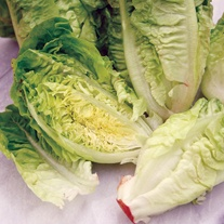 Lettuce Little Gem Bumper Seed Pack