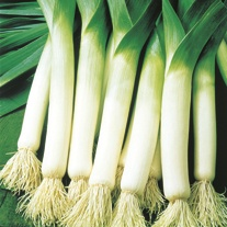 Leek Sultan F1 Seeds