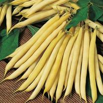 Dwarf Bean Polka Seeds