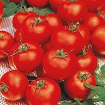 Tomato (Standard) Sparta F1 Seeds