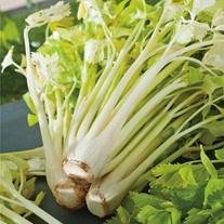 Celery Loretta Seeds