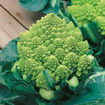 Cauliflower (Broccoli) Romanesco Natalino Seeds