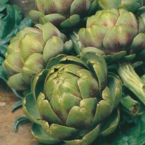 Artichoke Green Globe Seeds