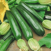 Courgette Firenze F1 Seeds