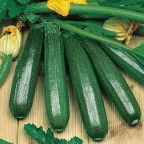 Courgette Endurance F1 Seeds