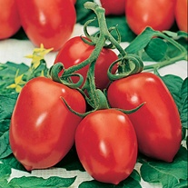 Tomato (Plum) Roma VF Seeds