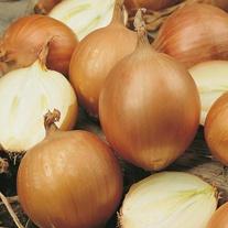 Onion Bonus F1 Seeds