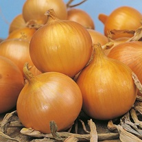 Onion Arthur F1 Seeds