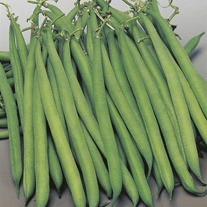 Dwarf Bean Safari Seeds