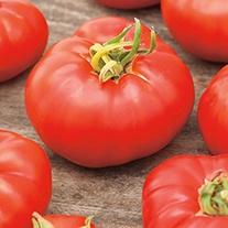 Tomato Marmande (Beefsteak) Veg Plants