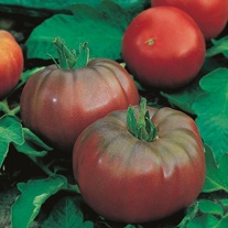 Tomato (Beefsteak) Black Russian Seeds