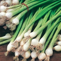 Onion (Spring) White Lisbon (Organic) Seeds
