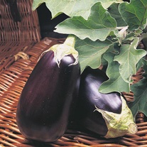 Aubergine Moneymaker No.2 F1 Seeds