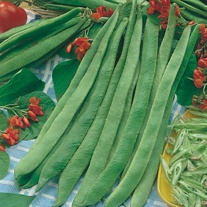 Runner Bean Prizewinner Seeds