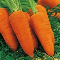 Carrot Chanteney Red Cored 2 Seeds