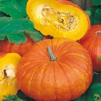 Pumpkin Rouge vif d'Etampes Seeds