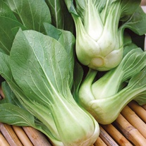 Pak Choi Green Revolution F1 Seeds