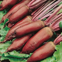 Beetroot Cylindra Seeds