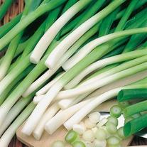 Onion (Spring) Ishikura Seeds