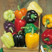 Pepper (Sweet) Colour Spectrum