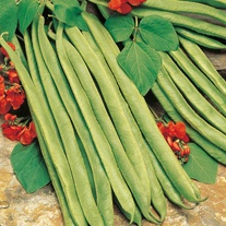 Runner Bean Lady Di Seeds