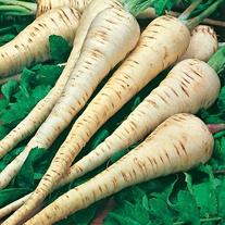 Parsnip Tender & True Seeds