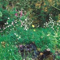 Wildflower Hedgerow & Verges