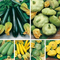 Courgettes & Summer Squashes Seed Collection