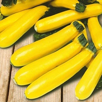 Courgette Soleil F1 Seeds