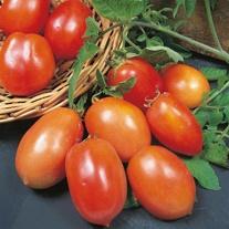 Tomato (Plum) San Marzano 2 (Organic) Seeds