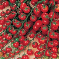 Tomato (Cherry) Sweet Million F1 Seeds