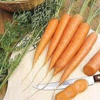 Carrot James Scarlet Intermediate Seeds