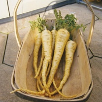 Parsnip Albion F1 Seeds