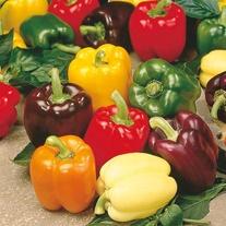 Pepper (Sweet) Rainbow F1 Seeds