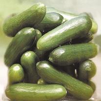 Cucumber Green Fingers F1 Seeds