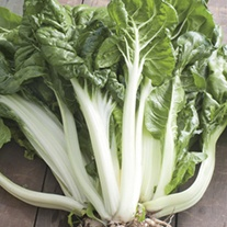 Chard White Silver 2 Seeds