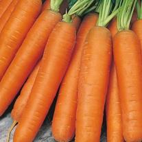 Carrot Nantes 5 Seed Tape