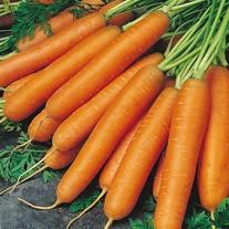 Carrot Nantes 2 (Organic) Seeds