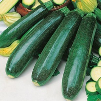 Courgette Zucchini Vegetable Seeds