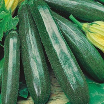Courgette Primula F1 Seeds
