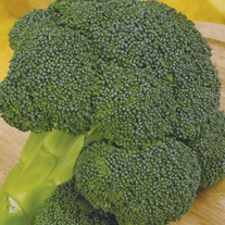 Broccoli (Calabrese) Ironman F1 Seeds