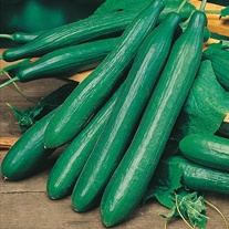 Cucumber Saturn F1 Seeds
